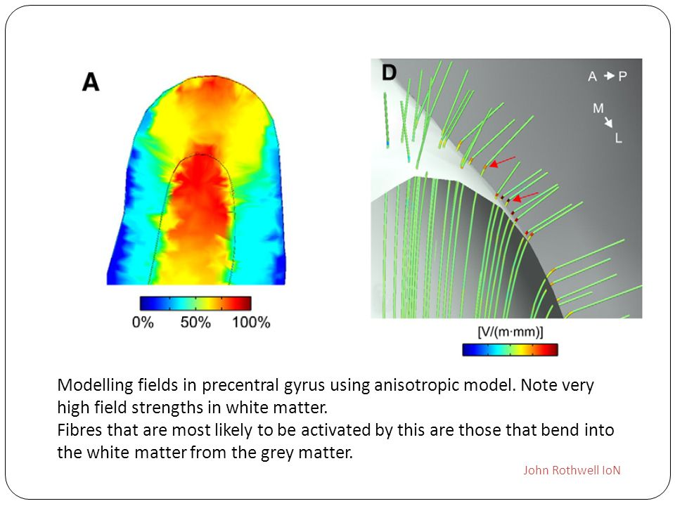 Modelling fields in precentral gyrus using anisotropic model. Note very high field strengths in white matter. Fibres that are most likely to be activa