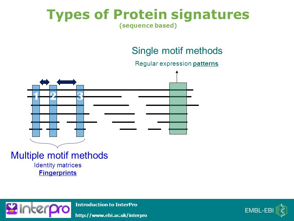 Introduction to InterPro   Multiple motif methods Identity matrices Fingerprints Single motif methods Regular expression patterns Types of Protein signatures (sequence based) 123