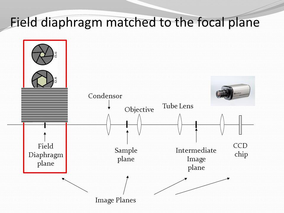 Sample plane Objective Condensor Field Diaphragm plane Tube Lens Intermediate Image plane Image Planes CCD chip Field diaphragm matched to the focal plane
