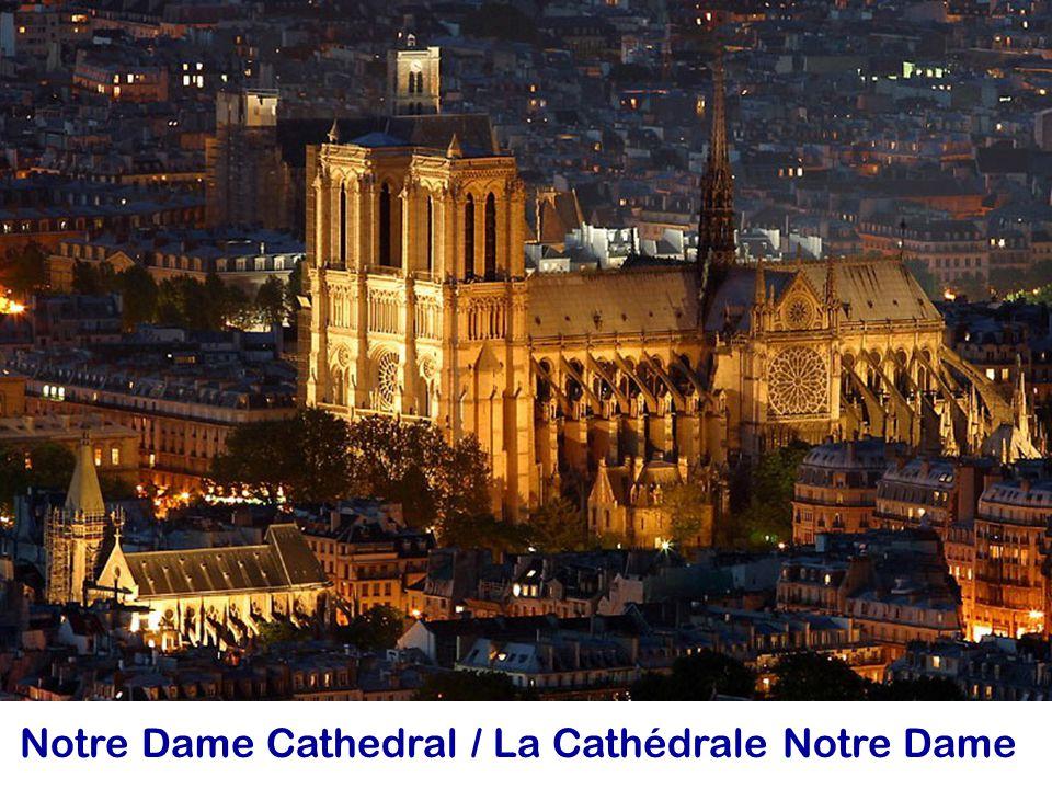 Notre Dame Cathedral / La Cathédrale Notre Dame