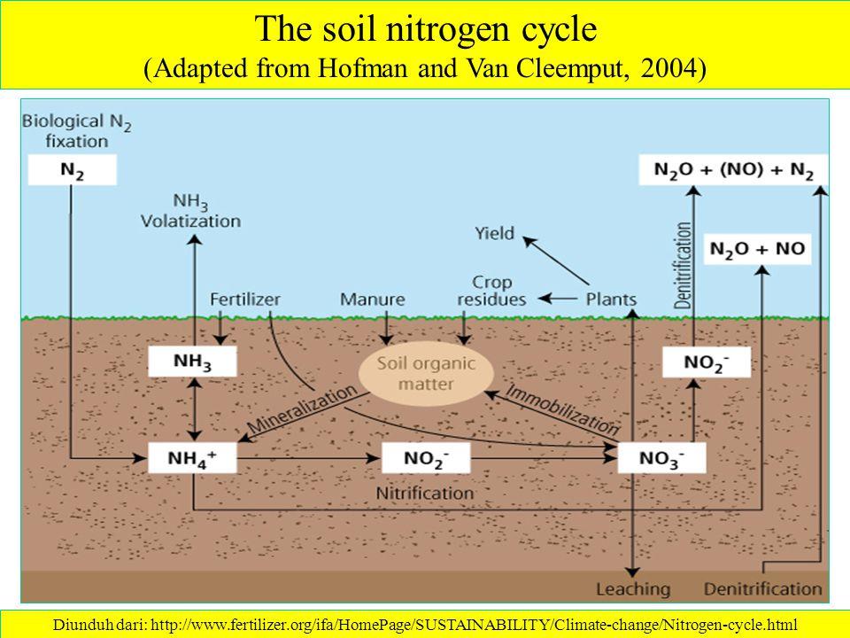 Siklus Nitrogen Ammonifikasi / Mineralisasi Immobilisasi Fiksasi nitrogen Nitrifikasi Denitrifikasi