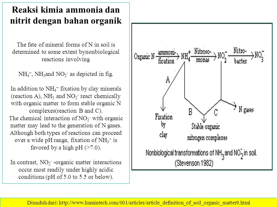 Transformasi N-tanah Diunduh dari: http://www.humintech.com/001/articles/article_definition_of_soil_organic_matter9.html A key feature of the internal cycle is the biological turnover of N betweenmineral and organic forms through the opposing processes of mineralizationand immobilization.