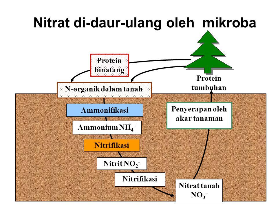 2 Nitrat (NO 3 -) esential bagi pertumbuhan tanaman Penyerapan oleh akar tanaman Nitrat NO 3 - Dalam tanah Protein dalam sel tanaman