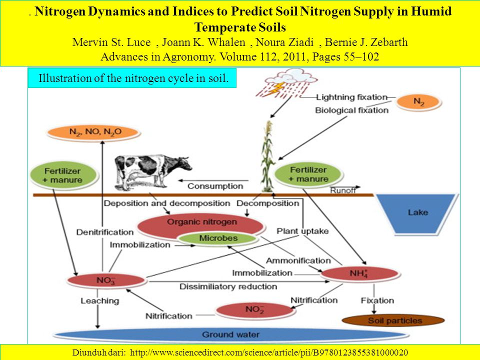 Nitrogen Dynamics and Indices to Predict Soil Nitrogen Supply in Humid Temperate Soils Mervin St.