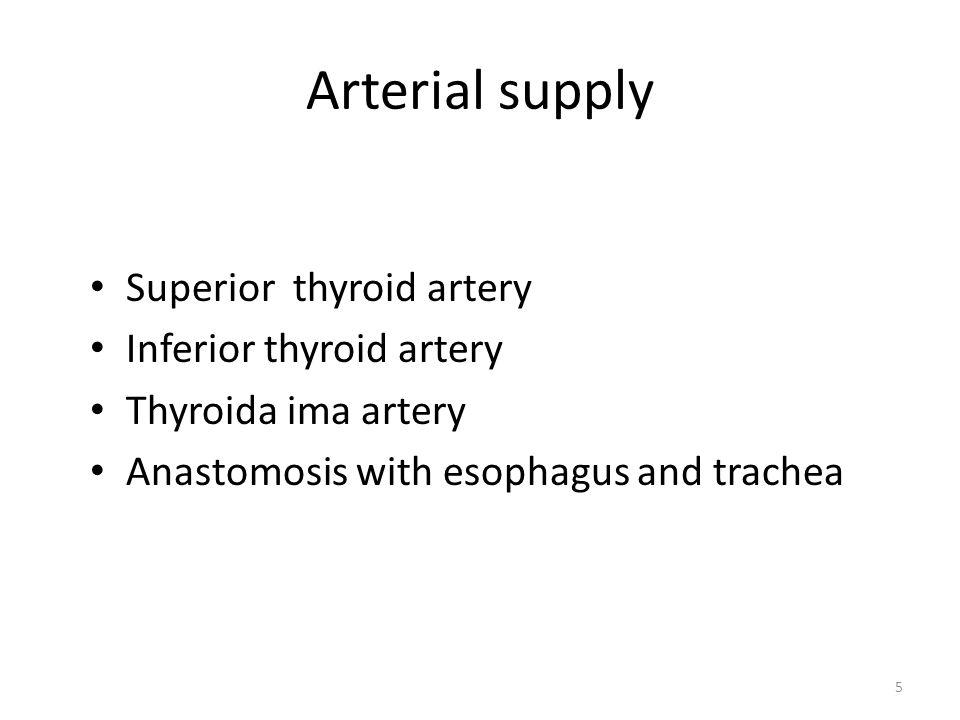 Arterial supply Superior thyroid artery Inferior thyroid artery Thyroida ima artery Anastomosis with esophagus and trachea 5