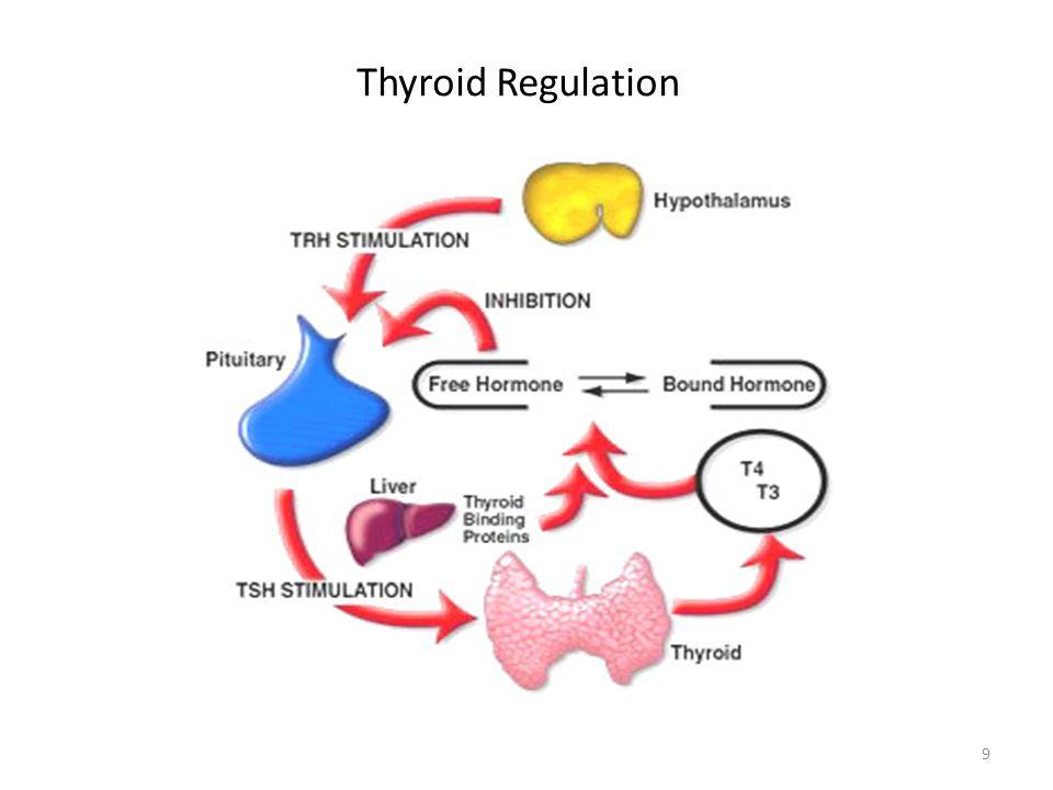 Thyroid Regulation 9