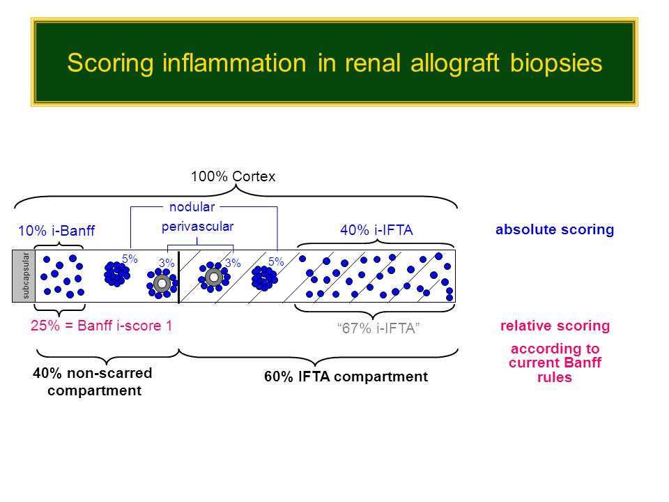 Scoring inflammation in renal allograft biopsies 60% IFTA compartment 40% non-scarred compartment 100% Cortex relative scoring according to current Ba