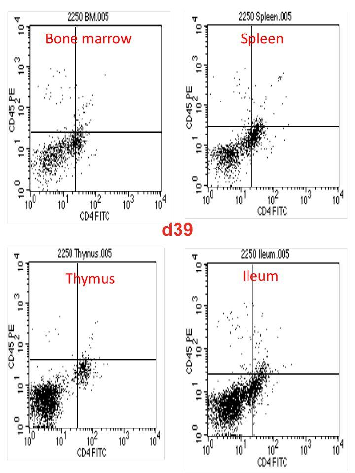 d39 Bone marrowSpleen Thymus Ileum