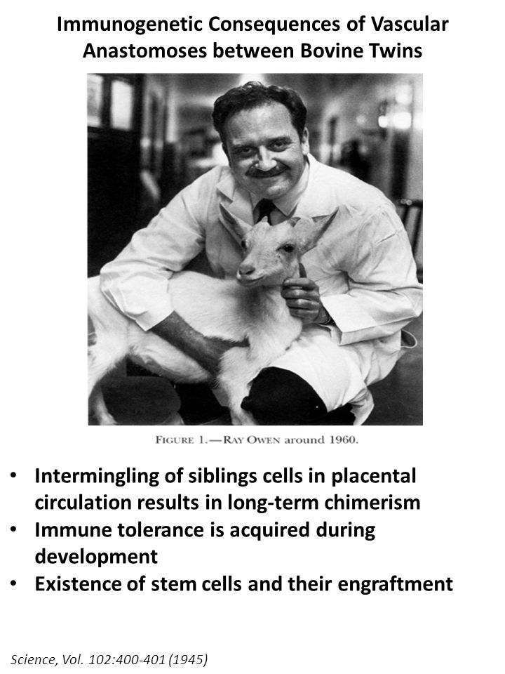 Science, Vol. 102:400-401 (1945) Immunogenetic Consequences of Vascular Anastomoses between Bovine Twins Intermingling of siblings cells in placental