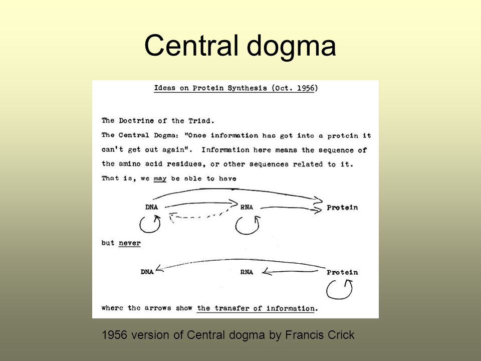 Central dogma 1956 version of Central dogma by Francis Crick
