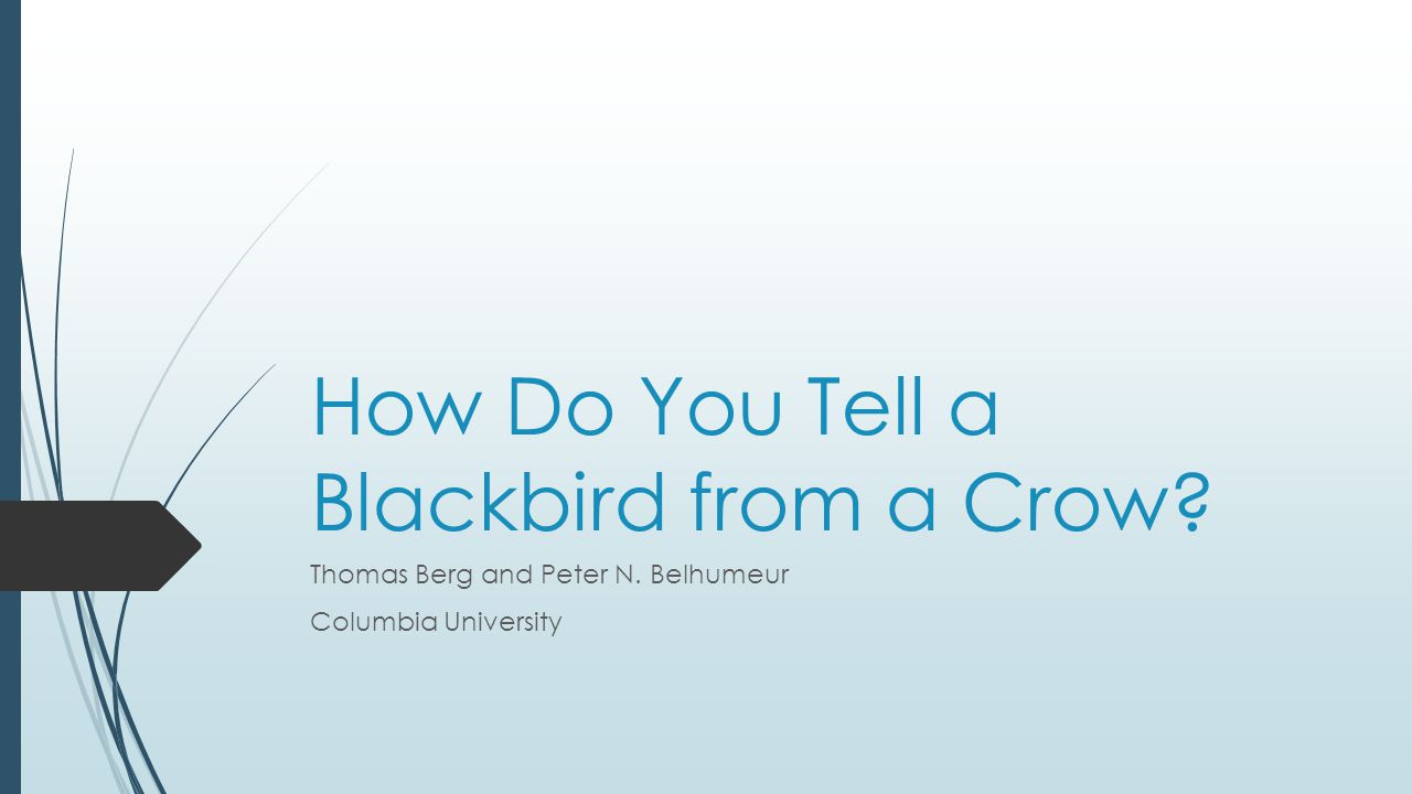 How Do You Tell a Blackbird from a Crow? Thomas Berg and Peter N. Belhumeur Columbia University