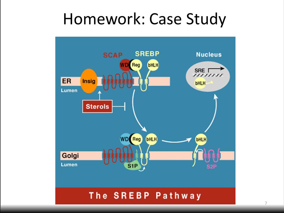 Recap: Learning Objectives Illustrate and identify individual components of a cellular pathway.