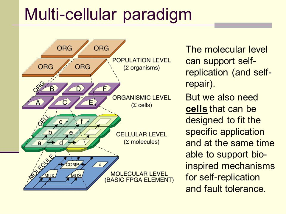 Multi-cellular paradigm The molecular level can support self- replication (and self- repair). But we also need cells that can be designed to fit the s