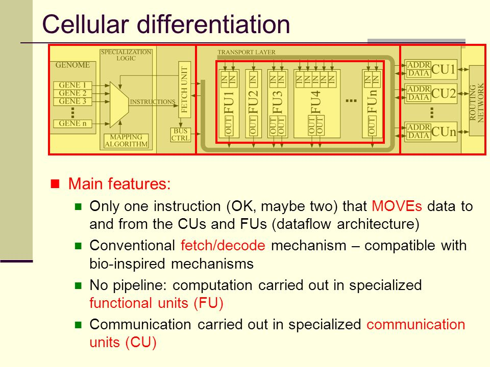 Cellular differentiation Main features: Only one instruction (OK, maybe two) that MOVEs data to and from the CUs and FUs (dataflow architecture) Conve