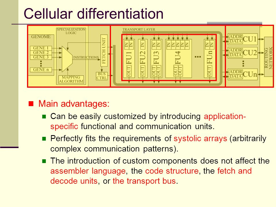 Cellular differentiation Main advantages: Can be easily customized by introducing application- specific functional and communication units. Perfectly