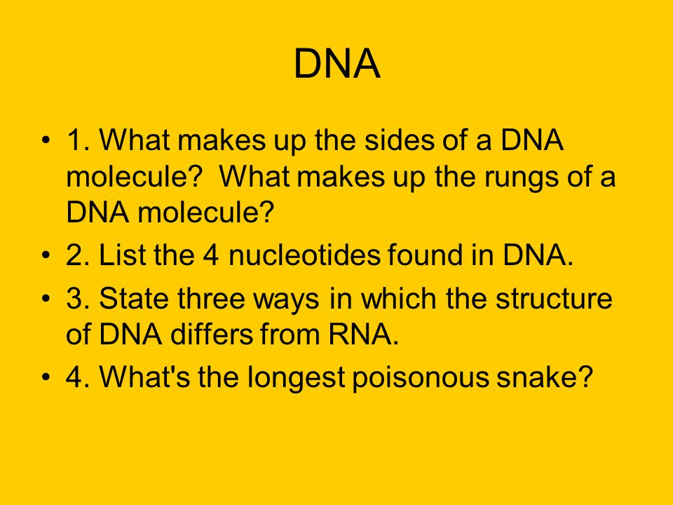 DNA 1. What makes up the sides of a DNA molecule? What makes up the rungs of a DNA molecule? 2. List the 4 nucleotides found in DNA. 3. State three wa