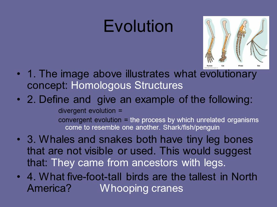 Evolution 1. The image above illustrates what evolutionary concept: Homologous Structures 2. Define and give an example of the following: divergent ev