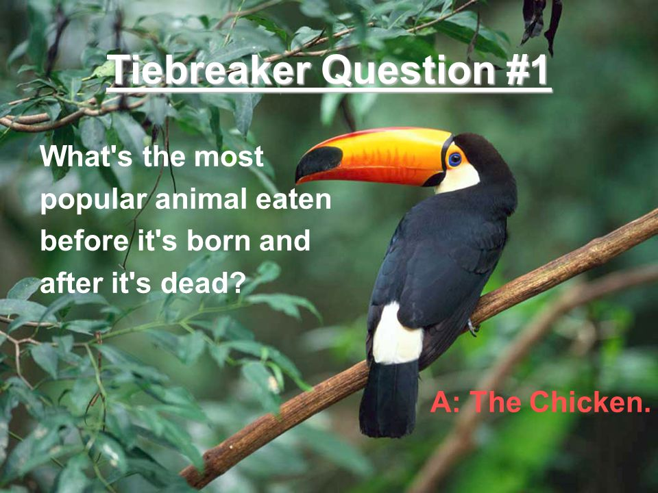 Tiebreaker Question #1 What's the most popular animal eaten before it's born and after it's dead? A: The Chicken.