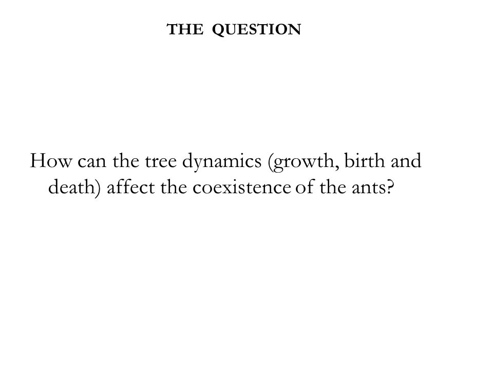 THE QUESTION How can the tree dynamics (growth, birth and death) affect the coexistence of the ants