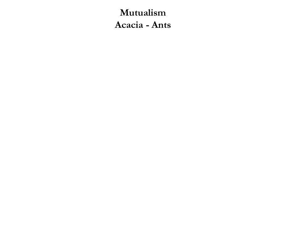 Mutualism Acacia - Ants