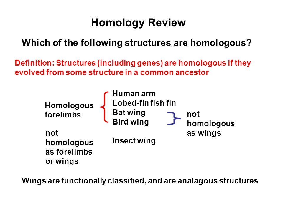 Homology Review Human arm Lobed-fin fish fin Bat wing Bird wing Insect wing Homologous forelimbs not homologous as forelimbs or wings Definition: Stru