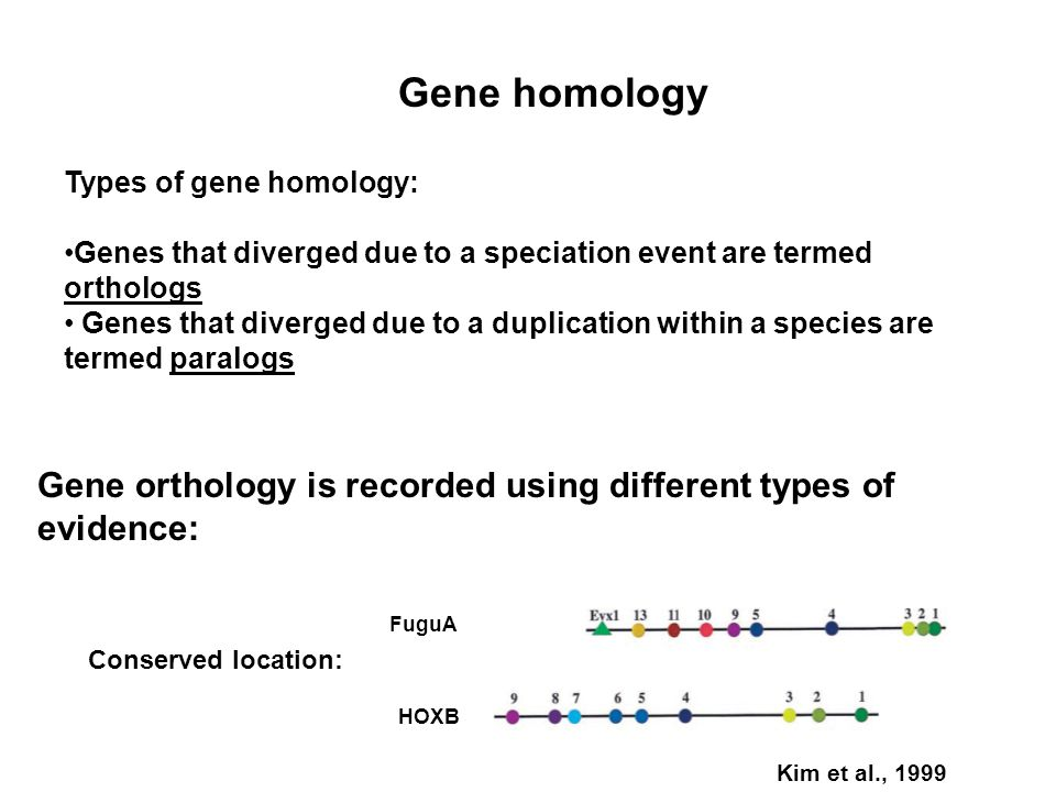 Gene homology Types of gene homology: Genes that diverged due to a speciation event are termed orthologs Genes that diverged due to a duplication with