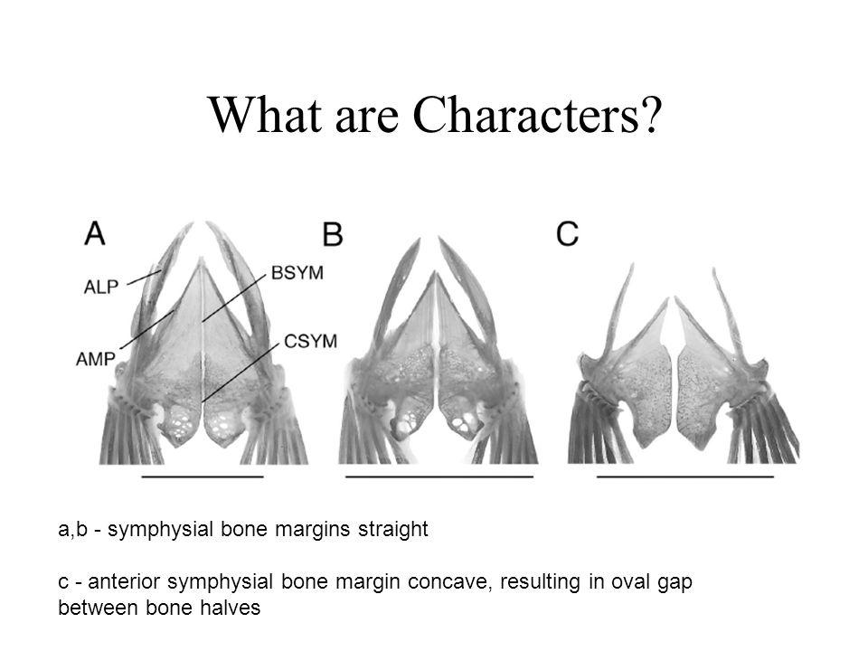 Character optimization Method to infer ancestral conditions (features) –Inferred ancestral condition dependent on phylogenetic tree –I.e.