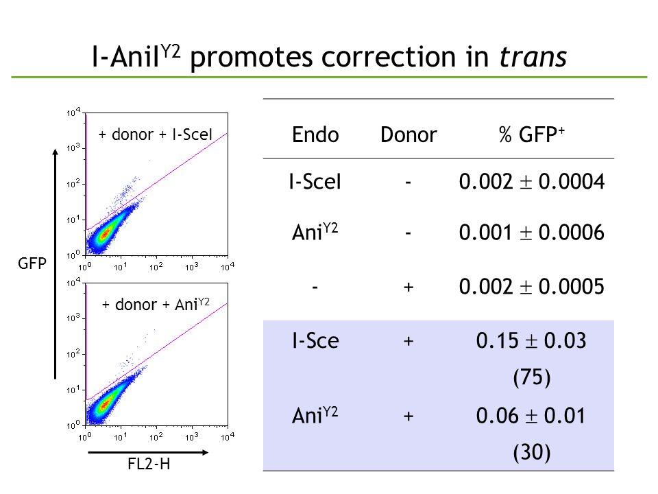 I-AniI Y2 promotes correction in trans EndoDonor% GFP + I-SceI- 0.002  0.0004 Ani Y2 - 0.001  0.0006 -+ 0.002  0.0005 I-Sce+ 0.15  0.03 (75) Ani Y2 +0.06  0.01 (30) GFP + donor + I-SceI + donor + Ani Y2 FL2-H
