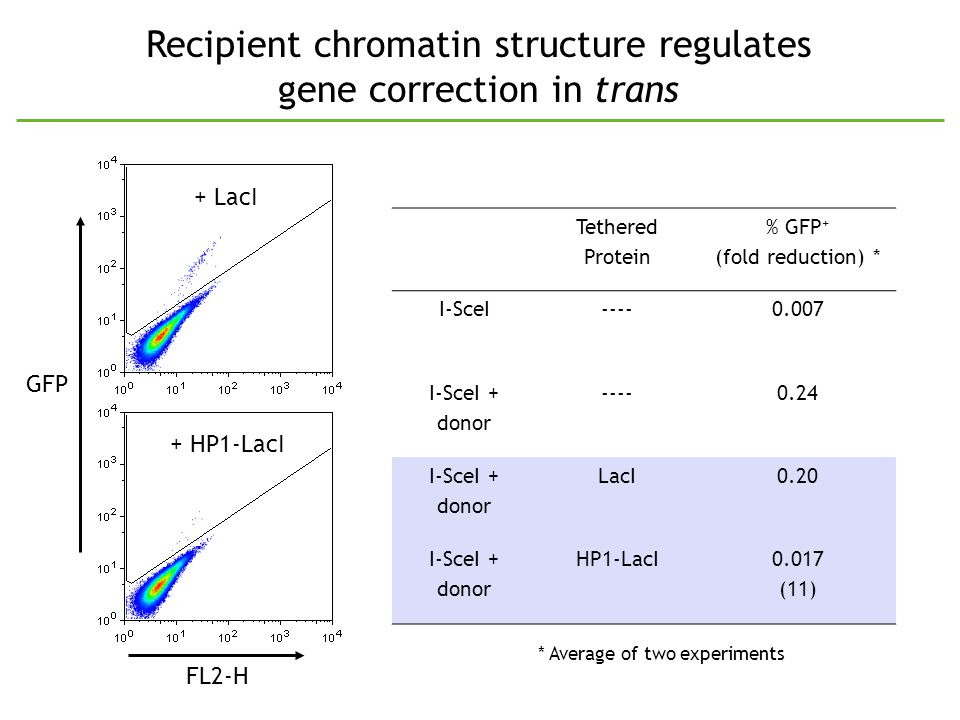 Recipient chromatin structure regulates gene correction in trans Tethered Protein % GFP + (fold reduction) * I-SceI----0.007 I-SceI + donor ----0.24 I-SceI + donor LacI0.20 I-SceI + donor HP1-LacI0.017 (11) * Average of two experiments + HP1-LacI GFP FL2-H + LacI