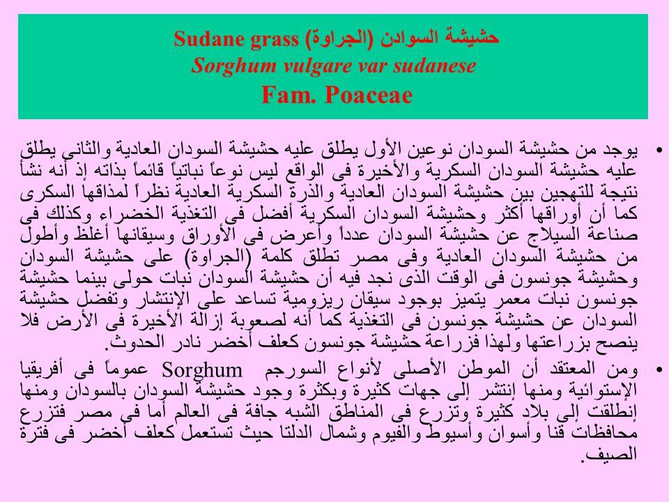 حشيشة السوادن ( الجراوة ) Sudane grass Sorghum vulgare var sudanese Fam.