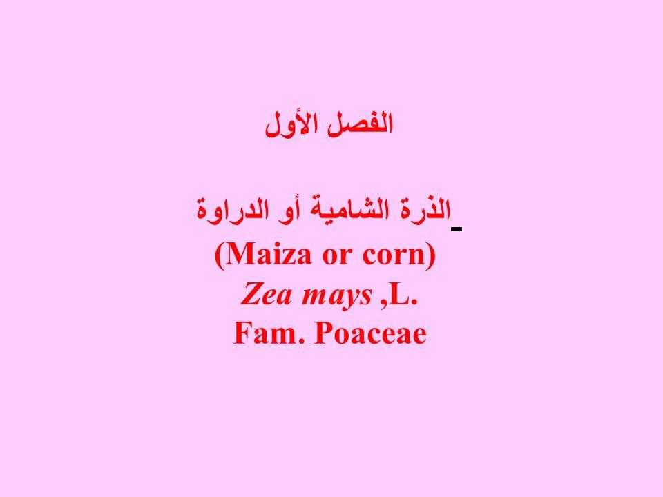 الفصل الأول الذرة الشامية أو الدراوة (Maiza or corn) Zea mays,L. Fam. Poaceae