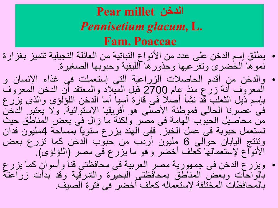 الدخن Pear millet Pennisetium glacum, L.Fam.