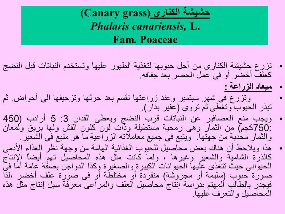 حشيشة الكنارى (Canary grass) Phalaris canariensis, L.