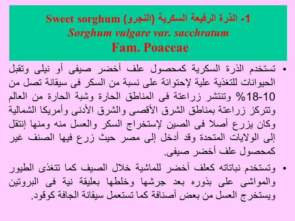 1 - الذرة الرفيعة السكرية ( النجرو ) Sweet sorghum Sorghum vulgare var.
