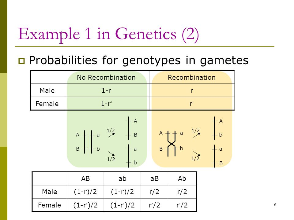Example 1 in Genetics (2)  Probabilities for genotypes in gametes 6 No RecombinationRecombination Male1-rr Female1-r ' r'r' ABabaBAb Male(1-r)/2 r/2