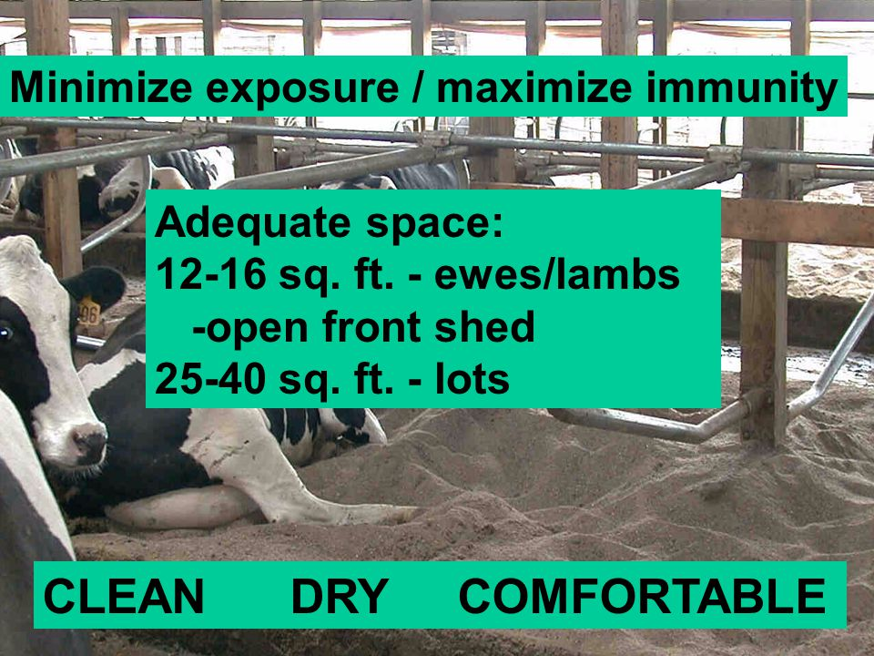 Minimize exposure / maximize immunity CLEAN DRY COMFORTABLE Adequate space: 12-16 sq.