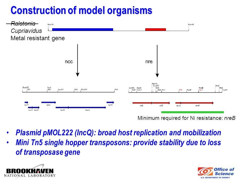 1.Broad expression range for nre encoded Ni resistance in both proteo and gram positive bacteria - proven concept (Dong et al., 1998; Taghavi et al., 2001) 2.Kanamycin selection marker nre gene provides Ni resistance to broad range of strains