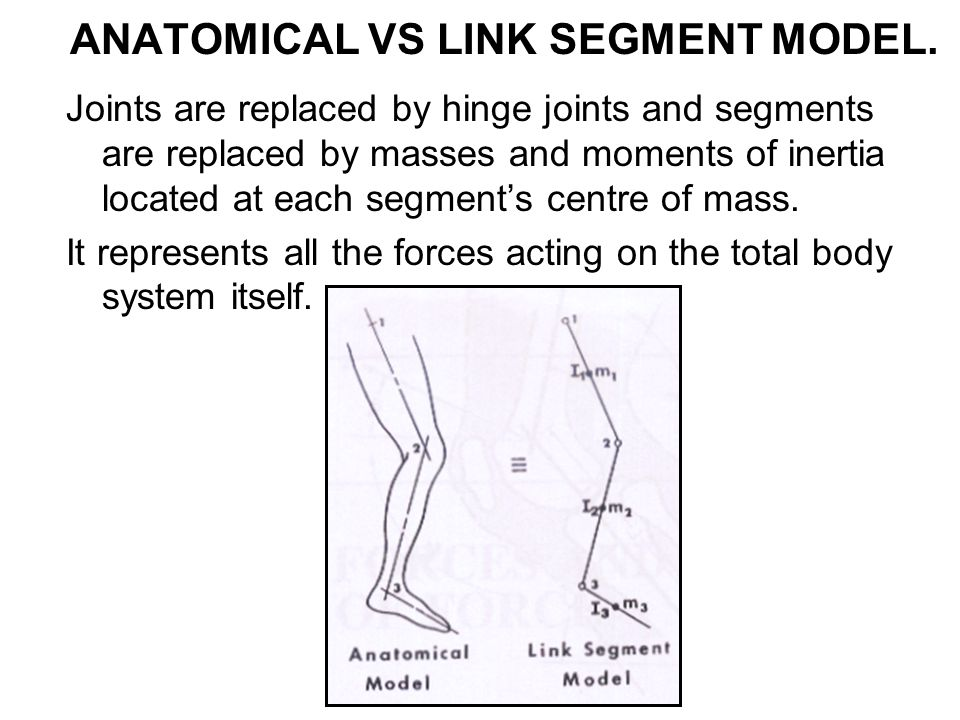 JOINT REACTION FORCES In analyzing a segments one at a time, we need to calculate the reaction between segments.