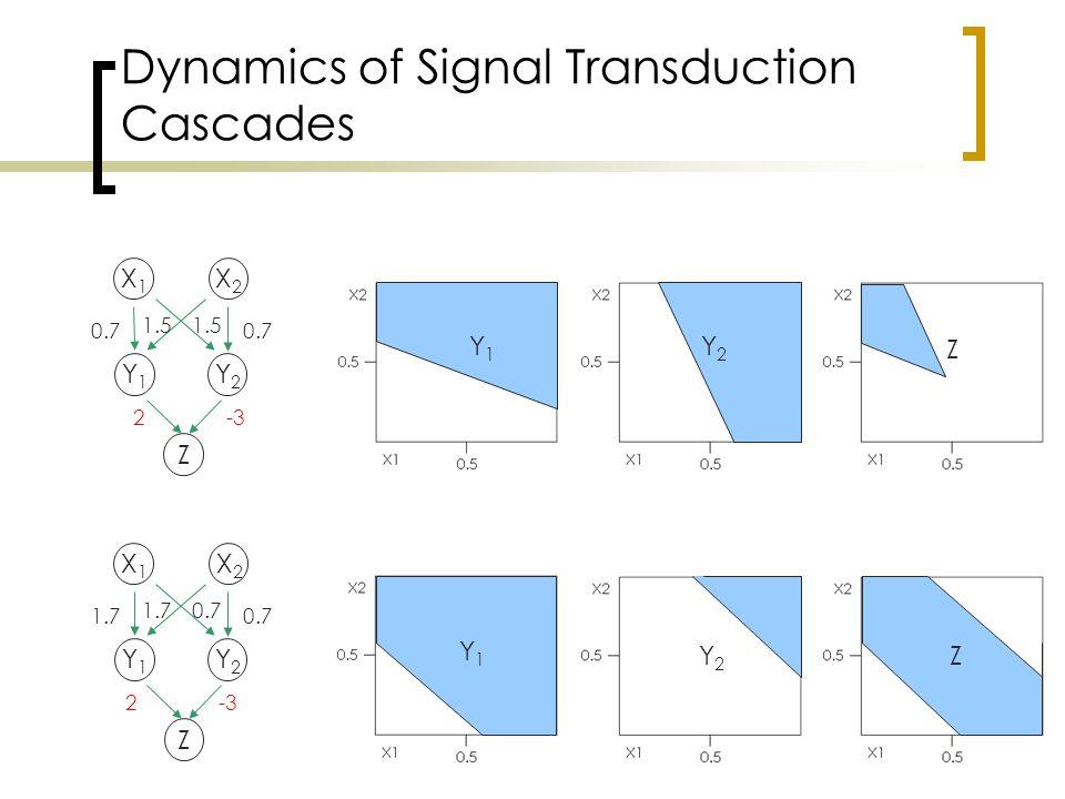 Dynamics of Signal Transduction Cascades X1X1 X2X2 Y1Y1 Y2Y2 Z 0.7 1.5 2-3 X1X1 X2X2 Y1Y1 Y2Y2 Z 1.7 0.7 1.70.7 2-3 Y1Y1 Y2Y2 Z Y2Y2 Z Y1Y1 Z
