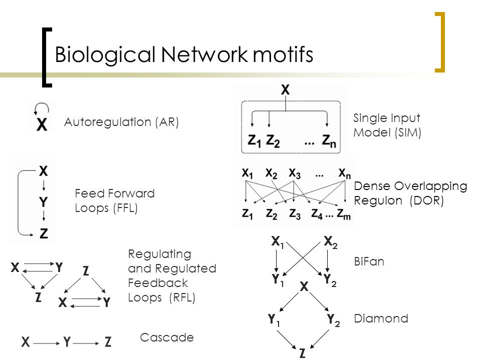 Biological Network motifs BiFan Diamond Autoregulation (AR) Feed Forward Loops (FFL) Regulating and Regulated Feedback Loops (RFL) Single Input Model (SIM) Dense Overlapping Regulon (DOR) Cascade