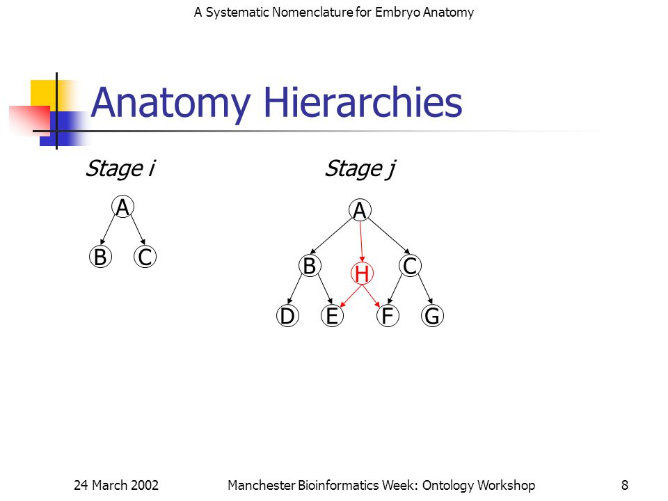 A Systematic Nomenclature for Embryo Anatomy 24 March 2002Manchester Bioinformatics Week: Ontology Workshop8 Anatomy Hierarchies A BC Stage i A BC DEFG Stage j H