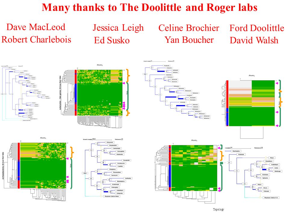 Many thanks to The Doolittle and Roger labs Celine Brochier Yan Boucher Dave MacLeod Robert Charlebois Jessica Leigh Ed Susko Ford Doolittle David Walsh Topology