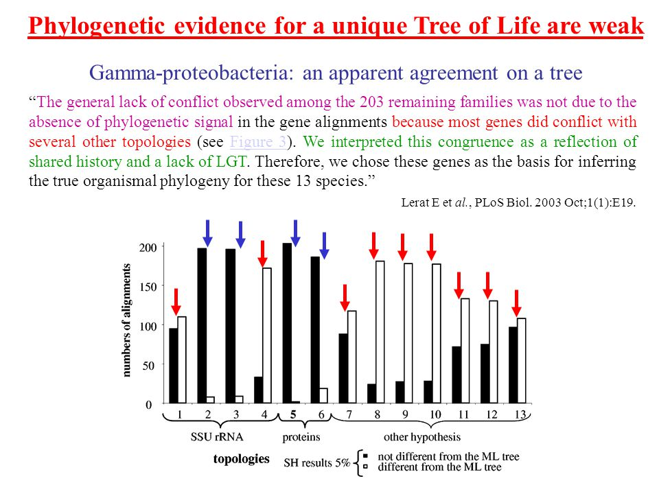 Phylogenetic evidence for a unique Tree of Life are weak The general lack of conflict observed among the 203 remaining families was not due to the absence of phylogenetic signal in the gene alignments because most genes did conflict with several other topologies (see Figure 3).