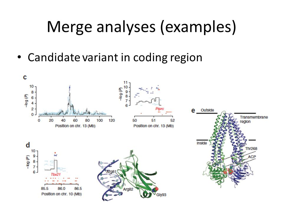 Merge analyses (examples) Candidate variant in coding region