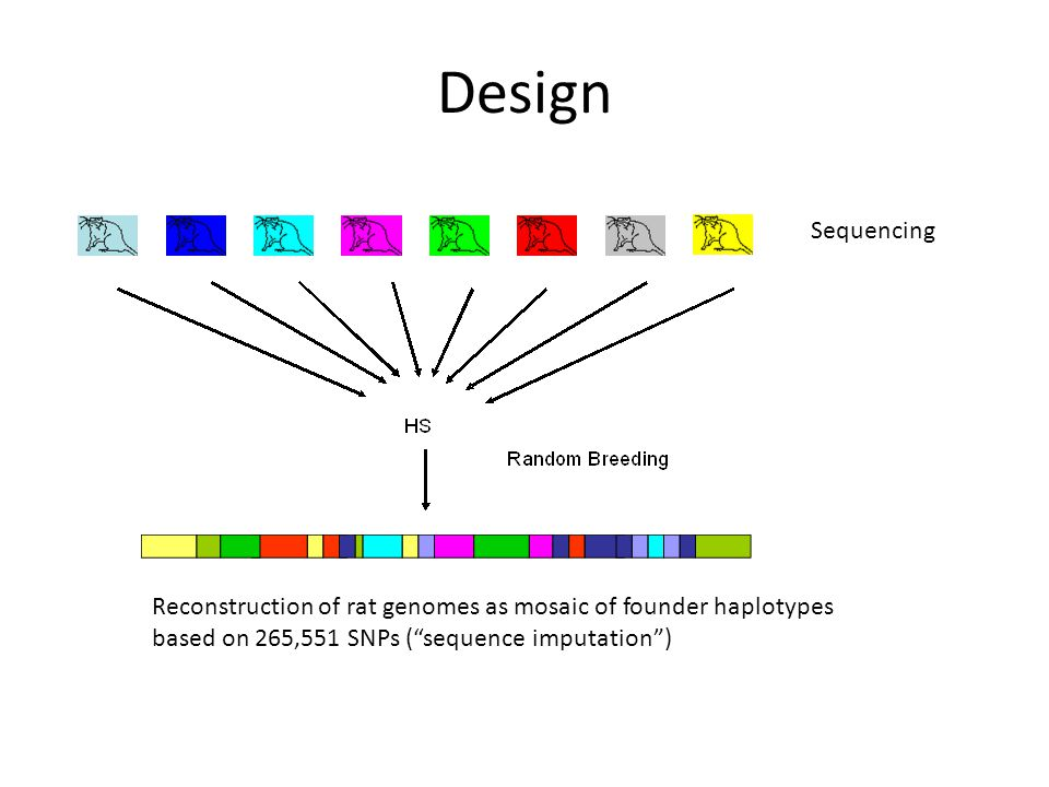 Design Sequencing Reconstruction of rat genomes as mosaic of founder haplotypes based on 265,551 SNPs ( sequence imputation )