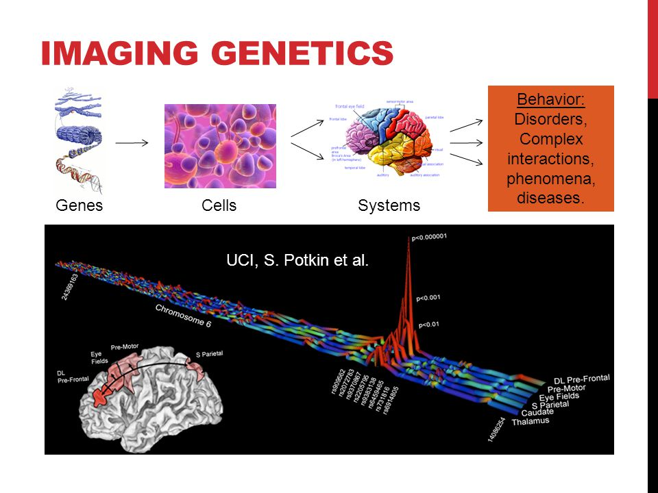 IMAGING GENETICS CellsSystems Behavior: Disorders, Complex interactions, phenomena, diseases.