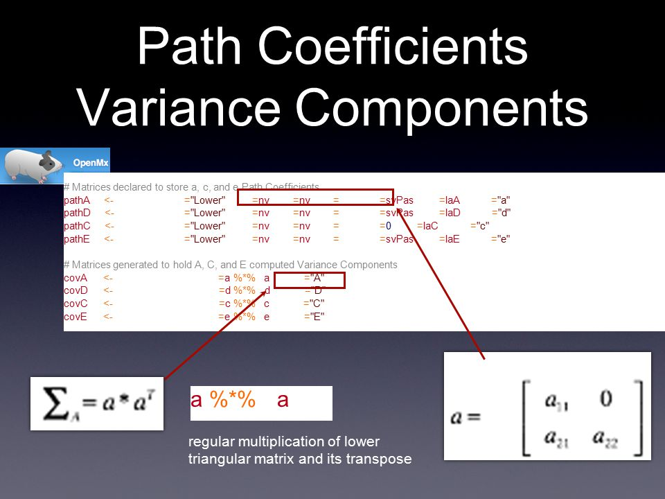 # Matrices declared to store a, c, and e Path Coefficients pathA <- mxMatrix( type= Lower , nrow=nv, ncol=nv, free=T, values=svPas, label=laA, name= a ) pathD <- mxMatrix( type= Lower , nrow=nv, ncol=nv, free=T, values=svPas, label=laD, name= d ) pathC <- mxMatrix( type= Lower , nrow=nv, ncol=nv, free=F, values=0, label=laC, name= c ) pathE <- mxMatrix( type= Lower , nrow=nv, ncol=nv, free=T, values=svPas, label=laE, name= e ) # Matrices generated to hold A, C, and E computed Variance Components covA <- mxAlgebra( expression=a %*% t(a), name= A ) covD <- mxAlgebra( expression=d %*% t(d), name= D ) covC <- mxAlgebra( expression=c %*% t(c), name= C ) covE <- mxAlgebra( expression=e %*% t(e), name= E ) Path Coefficients Variance Components regular multiplication of lower triangular matrix and its transpose A 1 A 2 P1P2P1P2 a %*% t(a)
