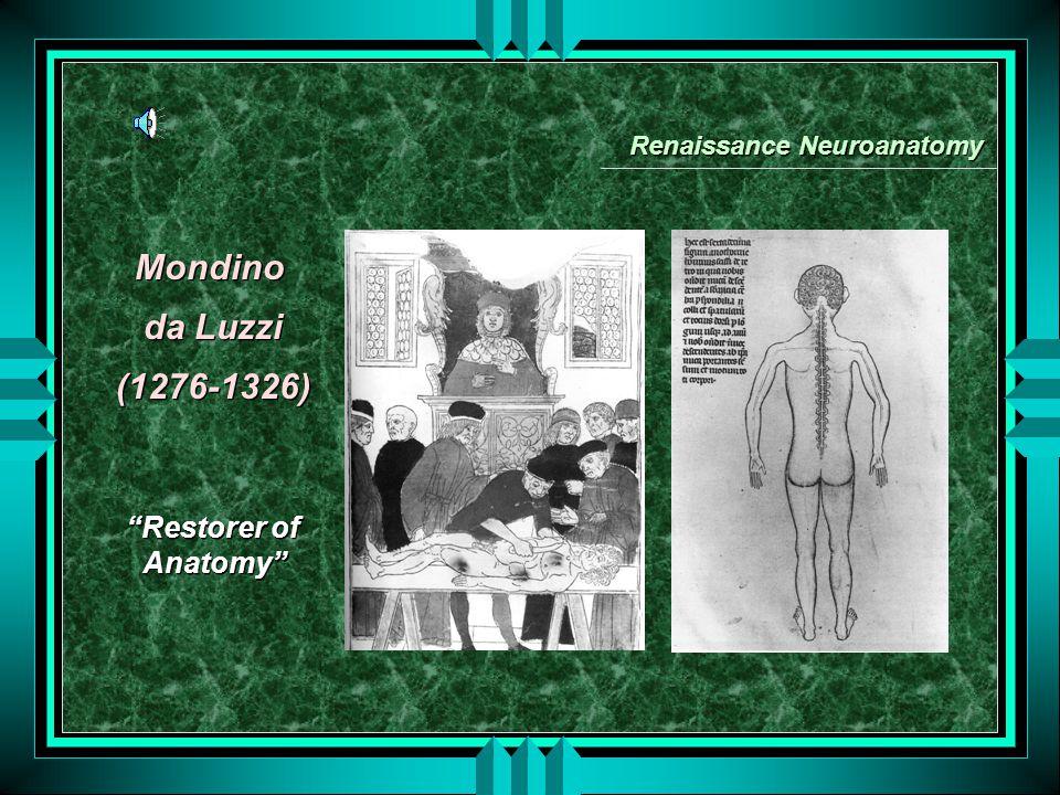 Mondino da Luzzi (1276-1326) Mondino da Luzzi (1276-1326) Renaissance Neuroanatomy Restorer of Anatomy Restorer of Anatomy