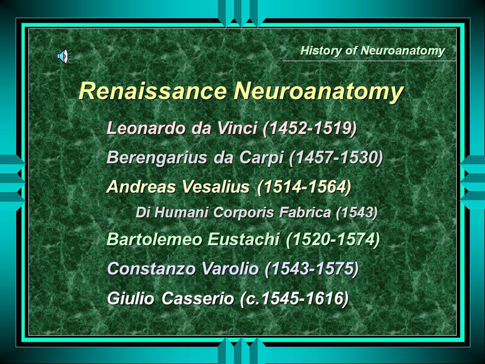 Renaissance Neuroanatomy Leonardo da Vinci (1452-1519) Berengarius da Carpi (1457-1530) Andreas Vesalius (1514-1564) Di Humani Corporis Fabrica (1543) Bartolemeo Eustachi (1520-1574) Constanzo Varolio (1543-1575) Giulio Casserio (c.1545-1616) Leonardo da Vinci (1452-1519) Berengarius da Carpi (1457-1530) Andreas Vesalius (1514-1564) Di Humani Corporis Fabrica (1543) Bartolemeo Eustachi (1520-1574) Constanzo Varolio (1543-1575) Giulio Casserio (c.1545-1616) History of Neuroanatomy