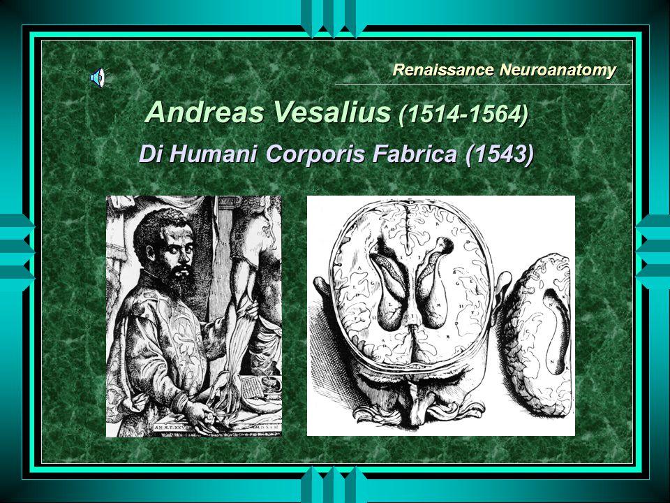 Andreas Vesalius (1514-1564) Di Humani Corporis Fabrica (1543) Andreas Vesalius (1514-1564) Di Humani Corporis Fabrica (1543) Renaissance Neuroanatomy